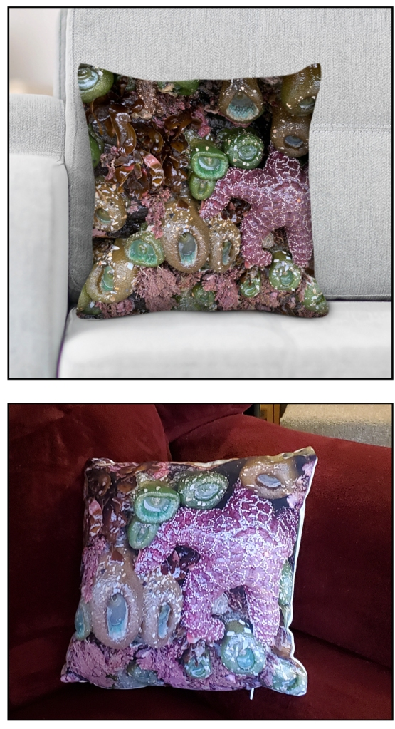 Two images show the preview of the tidepool pillow and the result after I received the actual tidepool pillow.