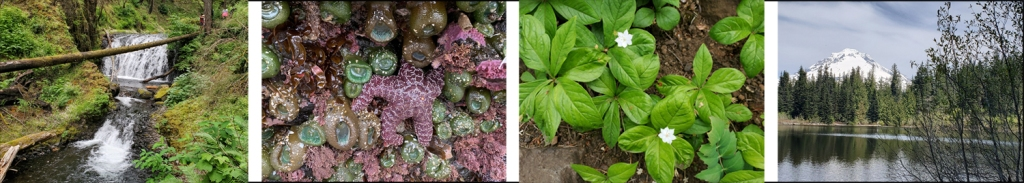 Four photos from hikes with a friend: a stream, a tidepool, wildflowers, and Mt. Hood.